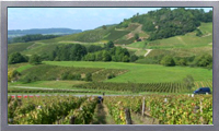 Royalty Free HD French wine region footage video clip